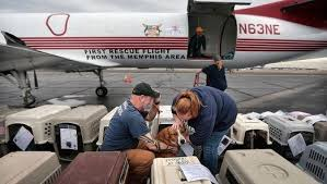 wings of rescue, donation, disaster, what to do, tips for donations, hurricane relief, how to give, aftermath, storm, destruction